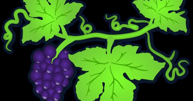 La uva, una vía para reducir peso