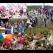 Las Fiestas de Verano... ¡En la Ribera del Duero!