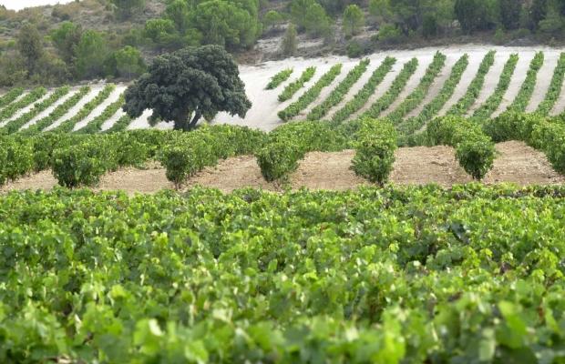 Bodegas Vega Sicilia en Ribera del Duero